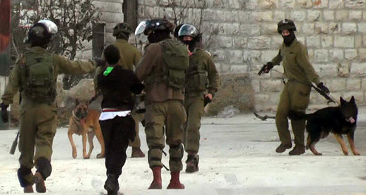 The soldiers, the teen who was attacked, and the attack dogs at Beit Umar.