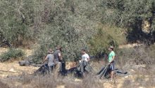 Jewish settlers in the act of stealing olives from a Palestinian owned grove on October 15, 2017