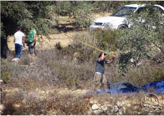 Israeli settlers documented illegally harvesting olives on land belonging to Palestinians