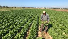 Twice a year, Israel sends planes to spray chemical herbicides along and adjacent to the border, which at times are carried by the wind deep into the Gaza Strip, destroying crops that are the sole source of income for hard-working farmers.