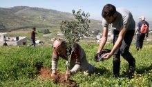 Volunteers organized by Rabbis for Human Rights work alongside Palestinian olive farmers.